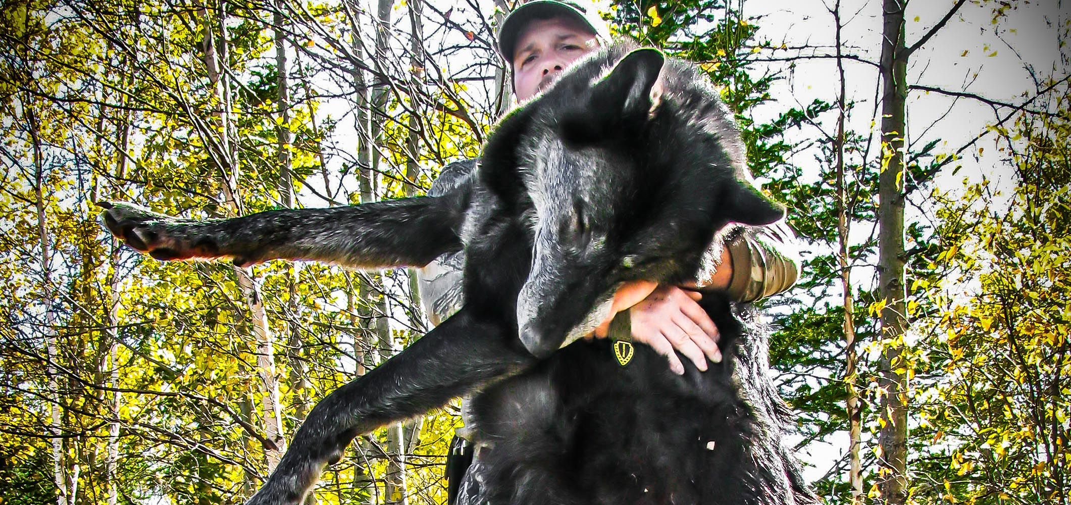 Canada Wolf Hunting Outfitters